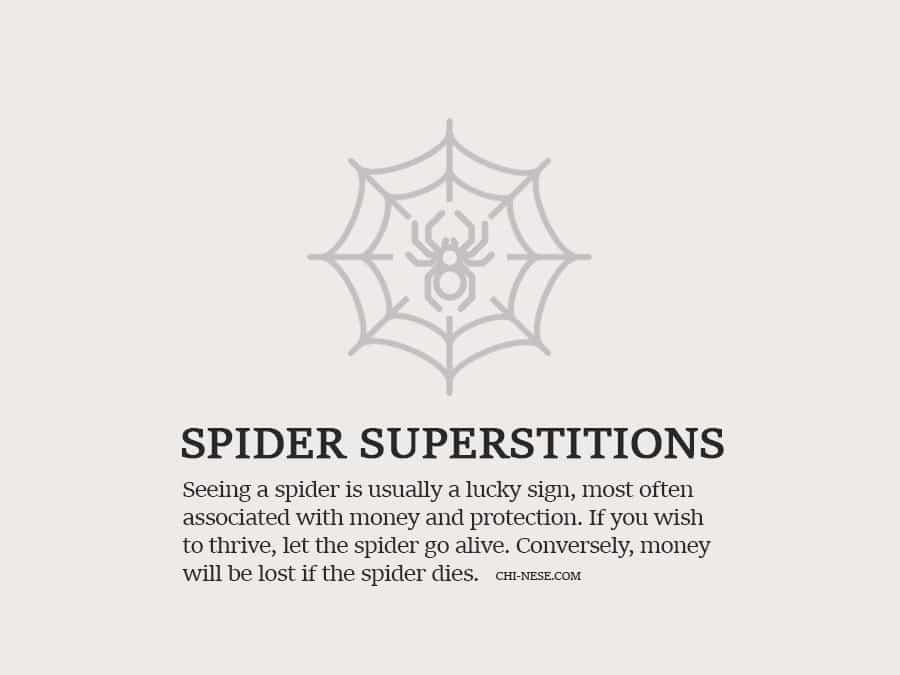 spider superstitions