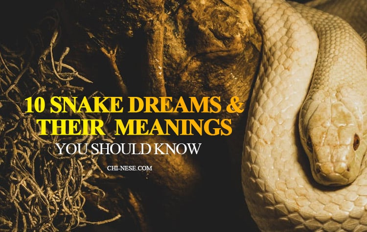 10 Snake Dream Meanings You Should Know - What Does It -3575