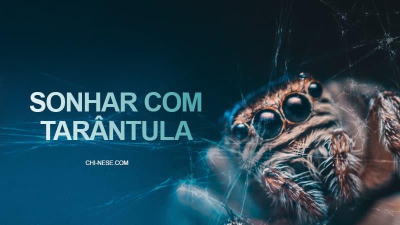 sonhar com aranha