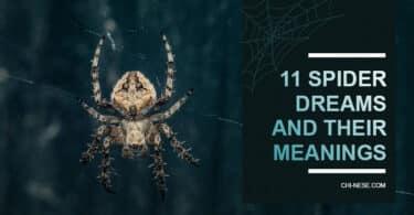 spider dream meaning interpretation