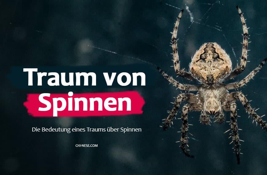 Traum von Spinnen