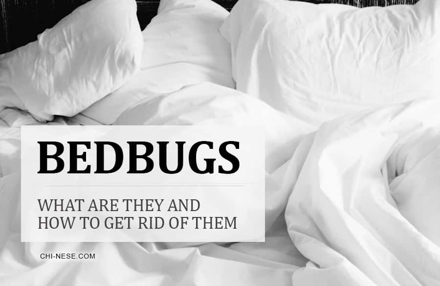 bedbugs how to get rid of them