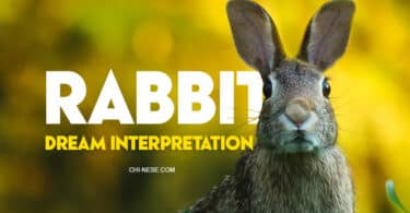 dream about rabbit