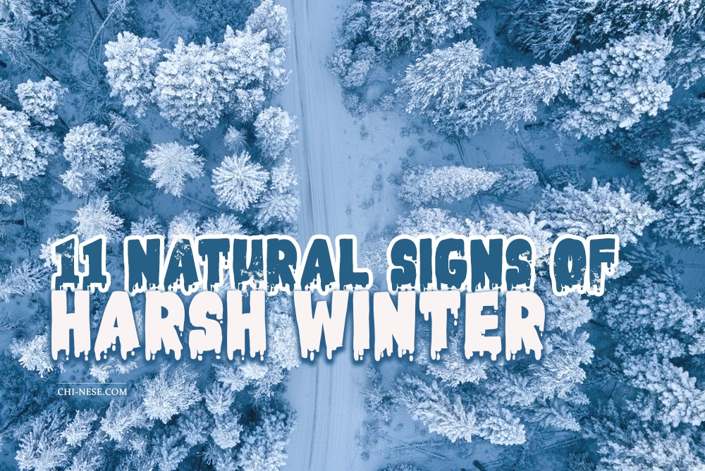 signs of harsh winter