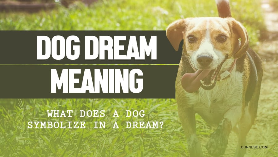 dog dream meaning