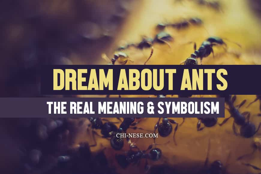 dream about ants